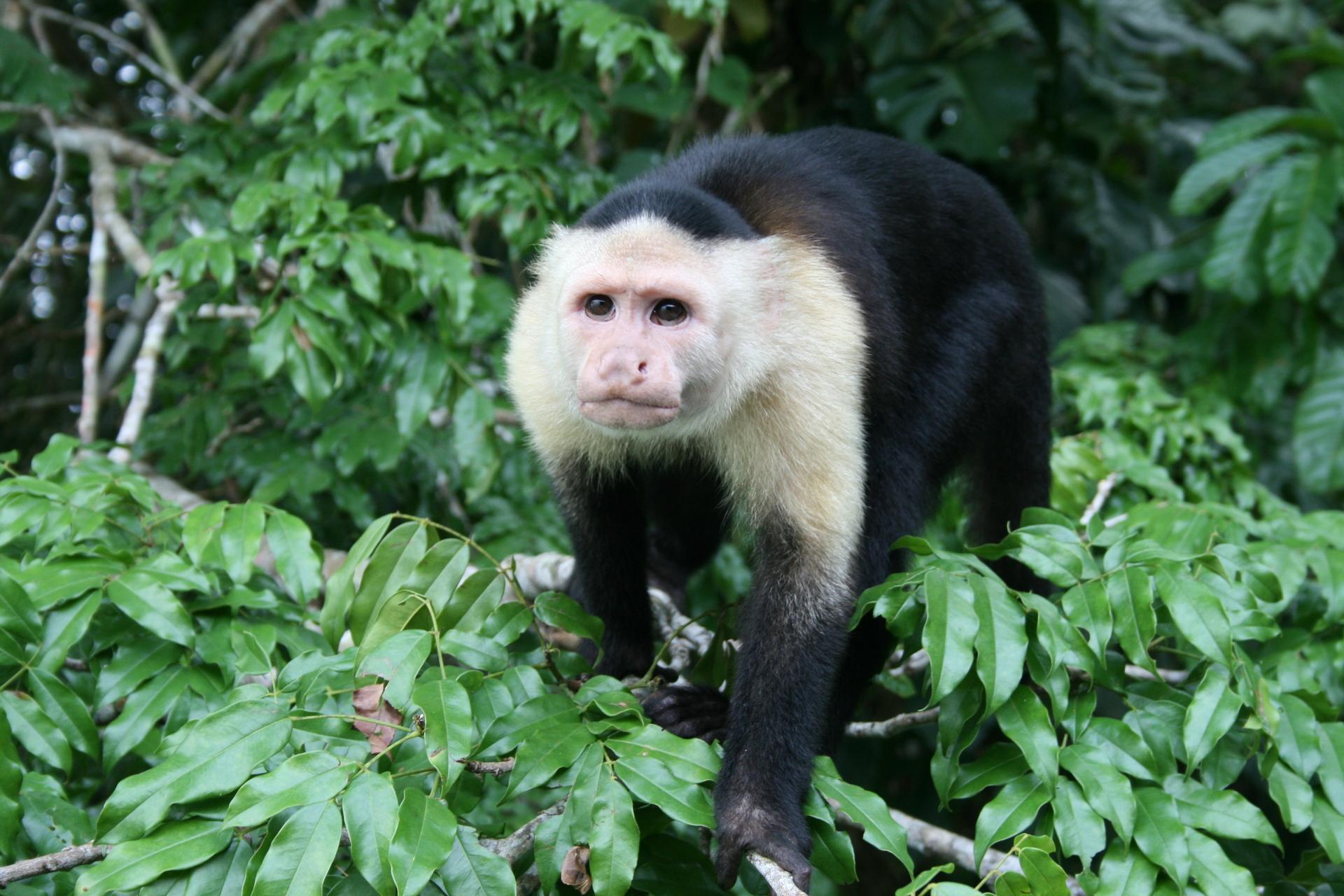 Panama wildlife, sanctuary, nature